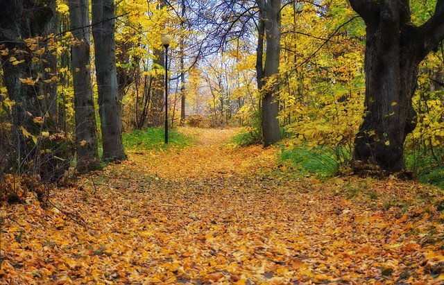 Fall colors.🍁 Memories of beautiful autumn.🍂 Finland.