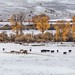 Early Snow Near Gunnison, Colorado, USA by Geraldine Curtis
