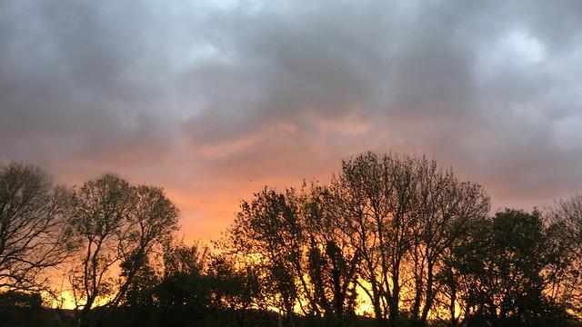 Sunset through trees, silhouette