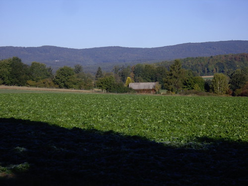 Blick zum Steinwald