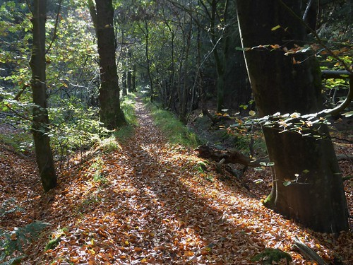 Eysinga woods, St Nic
