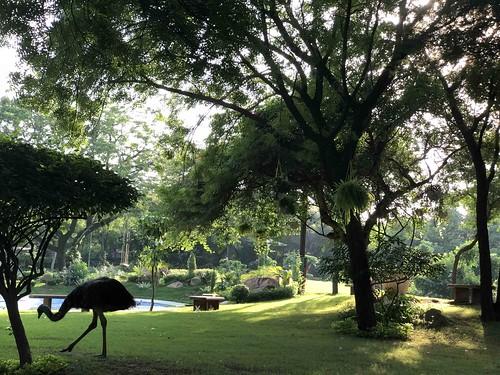 City Hangout - Emu Sighting, Vasant Vihar