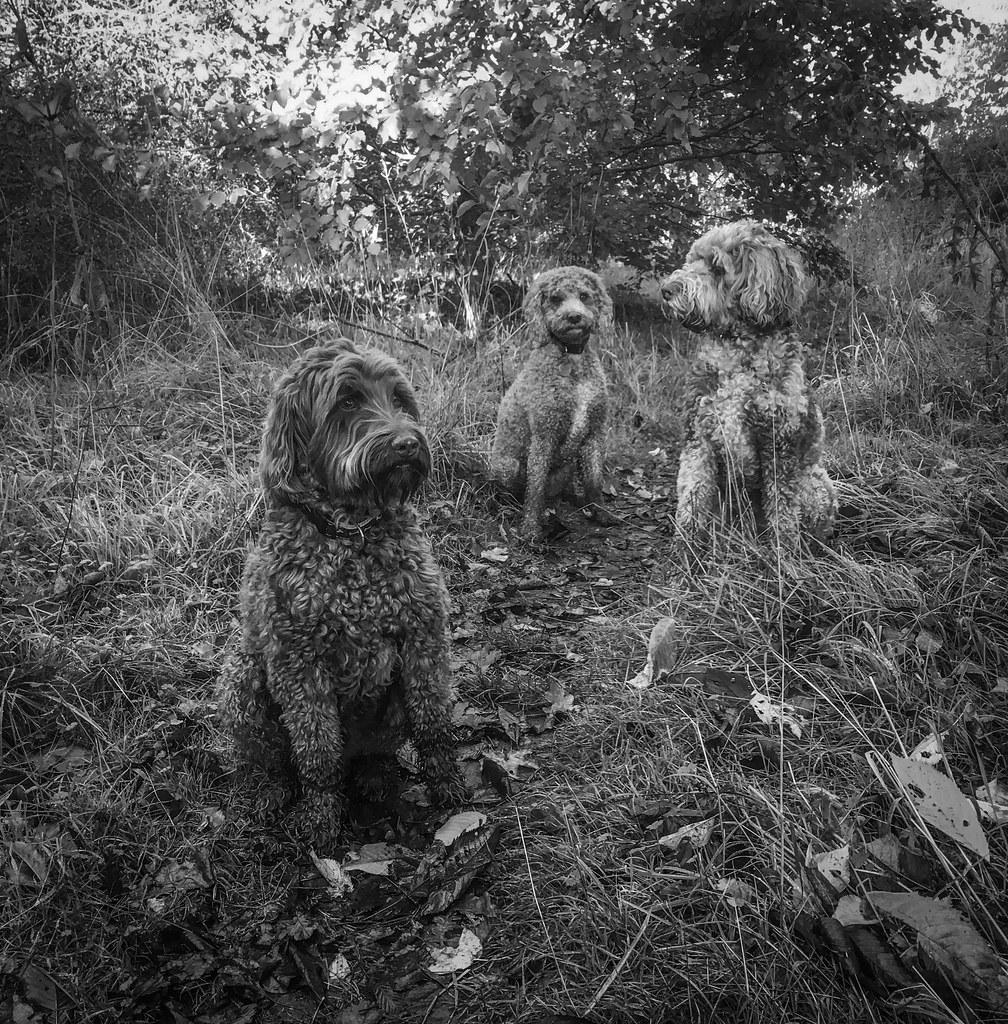 Ewok, Pip and Yogi