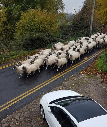 Sheep attack 2