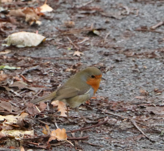 You have gotta to love a Robin!
