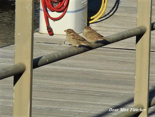 Uccellini (1)