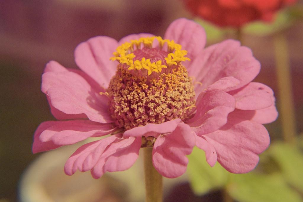 Spring 2018 Flower Closeups III | Nikon FE  Kodak Portra 400