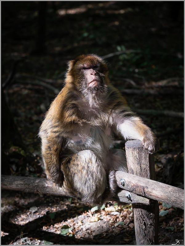Terre des singes part3 45004302661_4f3040c704_c