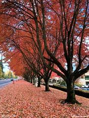 Fall color at Canyon Park