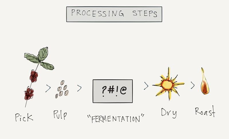 Quá trình lên men cà phê – Coffee Fermentation
