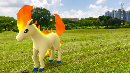 077 Ponyta (position=left)