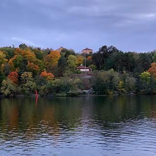 #foliage #sverige