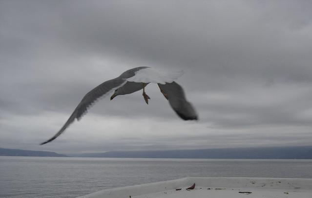 Sivi dan na moru