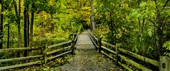 Concord Woods_20181030_10