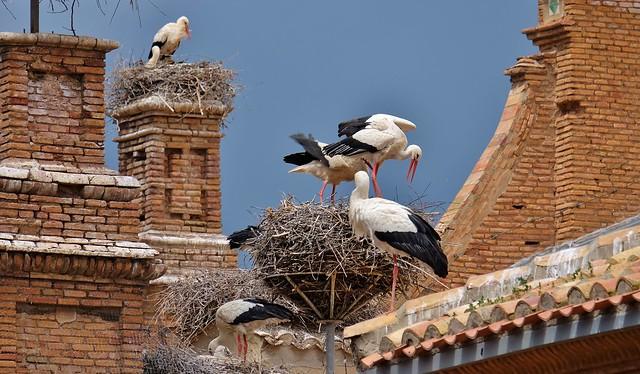 Les cigognes d'Alfaro, Ribera d'Ebre
