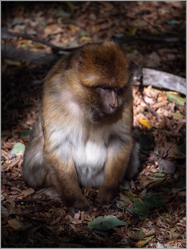 Terre des singes part3 44093456055_0d44e385cf_c
