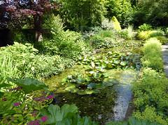 2018.06.20.080 CASTILLON - Les jardins, jardin d'eau