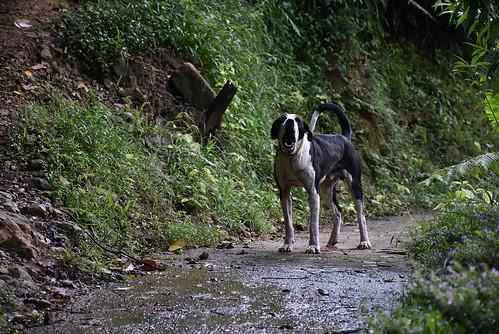 幼坑古道-民宅前的小狗