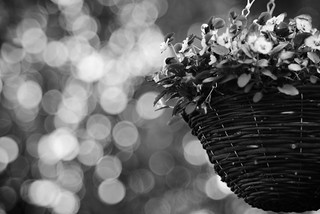 basket & bubbles