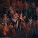 """Autumn Performance"" by D Breezy - davidthompsonphotography.com"