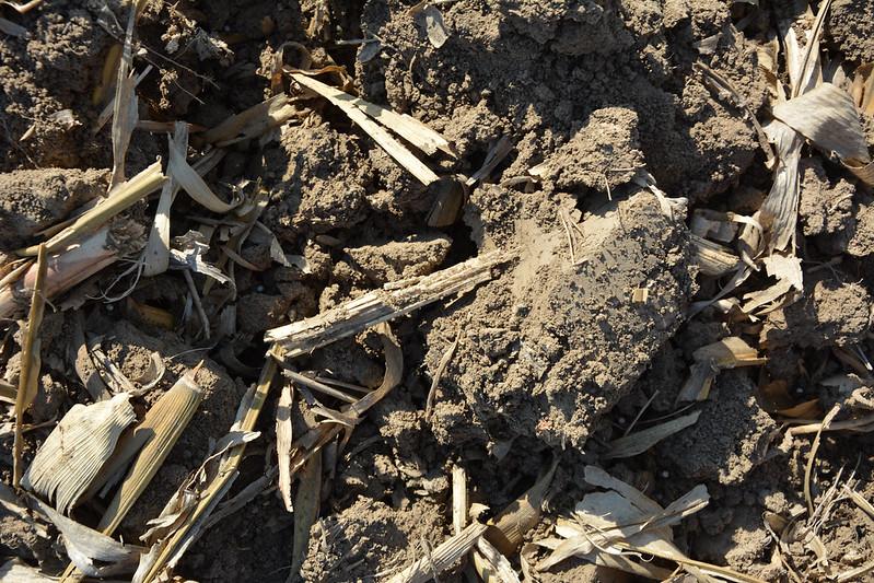 Brown Ground Texture #05