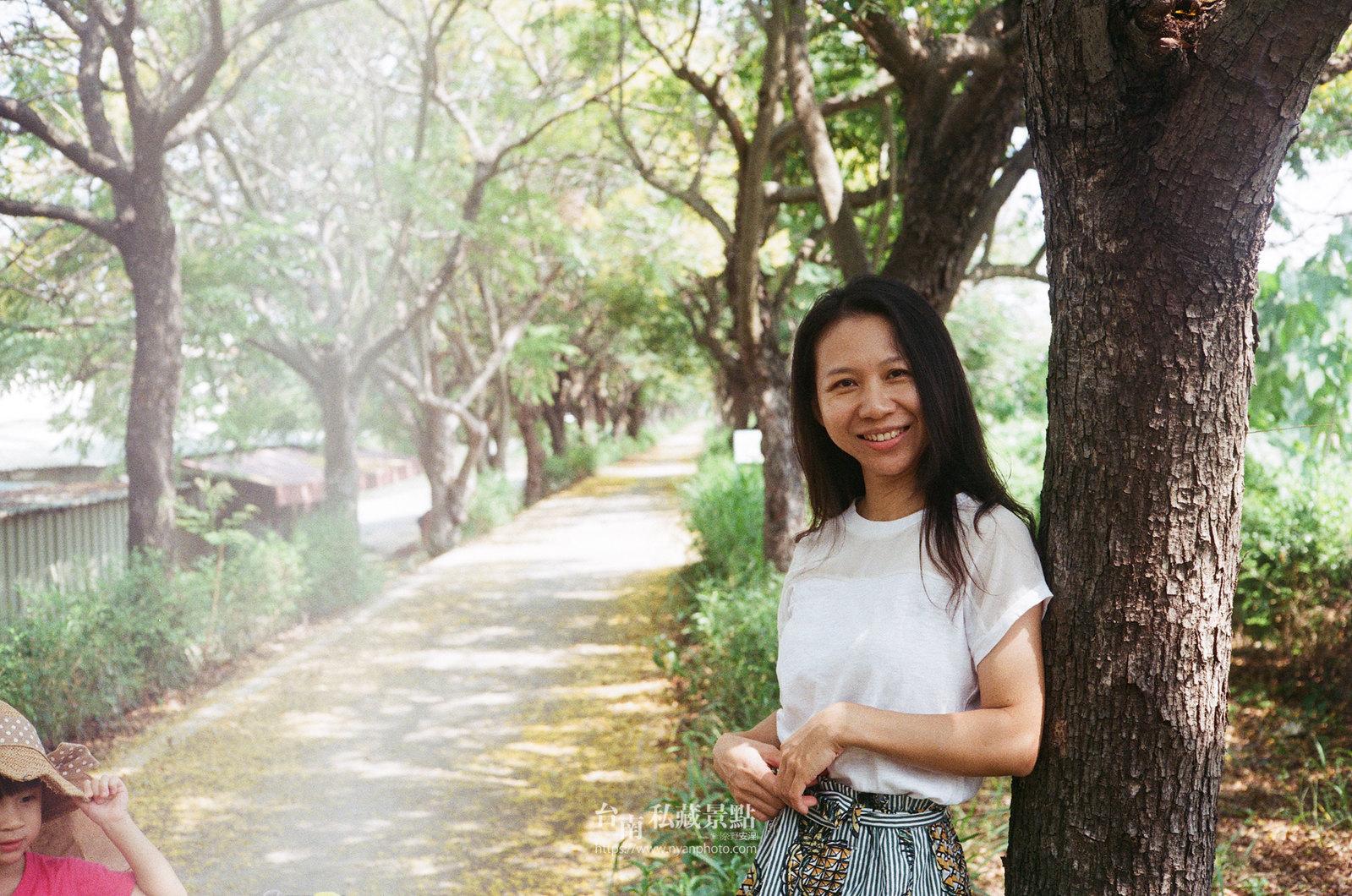 台南台灣欒樹5
