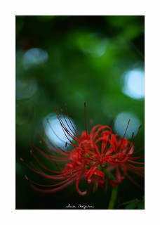 2018/9/22 - 16/24 photo by shin ikegami. - SONY ILCE‑7M2 / Carl Zeiss C Sonnar T* 1.5/50 ZM