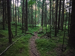 Røtter og Trangt - Kobling - Prestegårdsskogen - Askim - Østfold - Norway