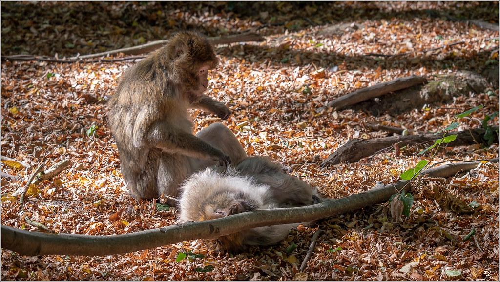 Terre des singes part3 45004348241_d6674eb888_b