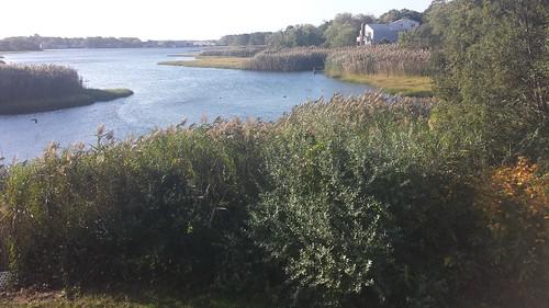 massachusetts lewisbay capecod saltwater atlantic