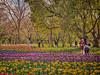 Photo:チューリップの花園で XVII By jun560
