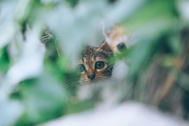Where's the cat? 巷裡尋貓|Chiayi 嘉義