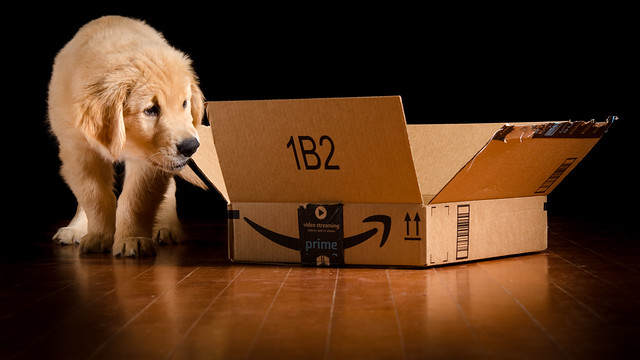 Puppy vs. Box