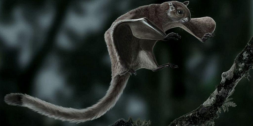 Le plus ancien fossile d'un écureuil volant