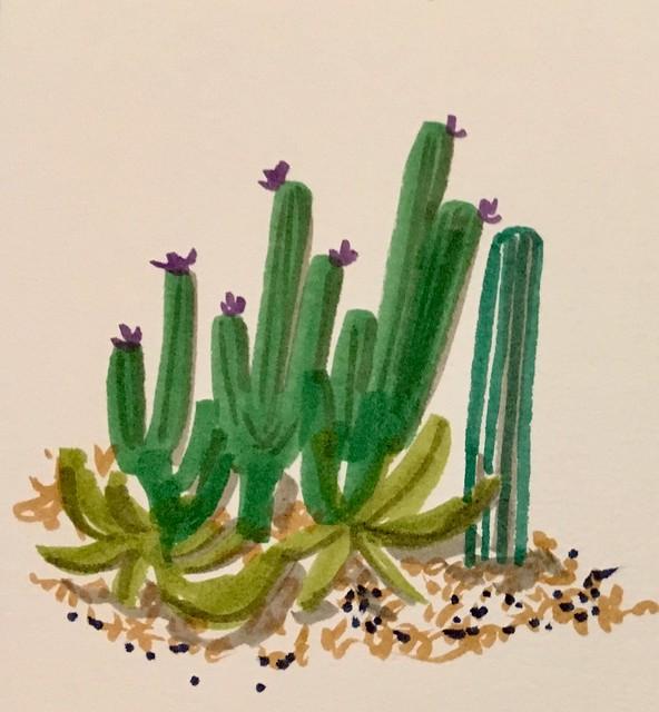 Cactus illustration - Inktober