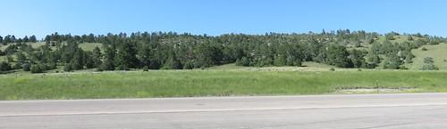 Black Hills Landscape (Weston County, Wyoming)