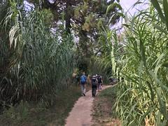Walking through the bamboos