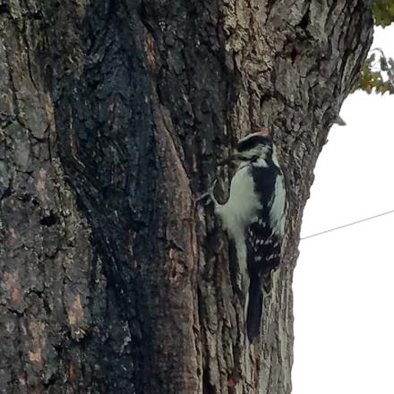 Woodpeckin'
