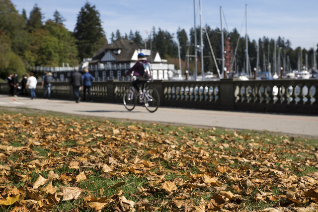 Autumn in Stanley Park