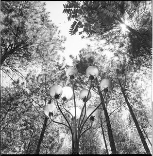 Bulbs and Trees