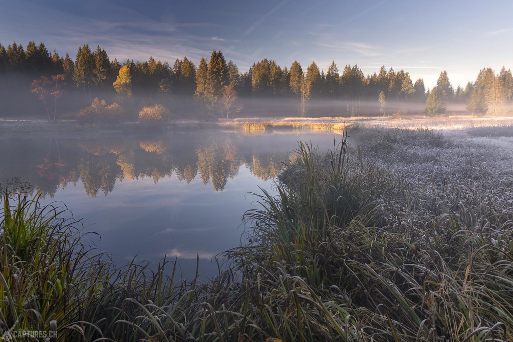 Morning light in the swamp - Wachseldornmoos