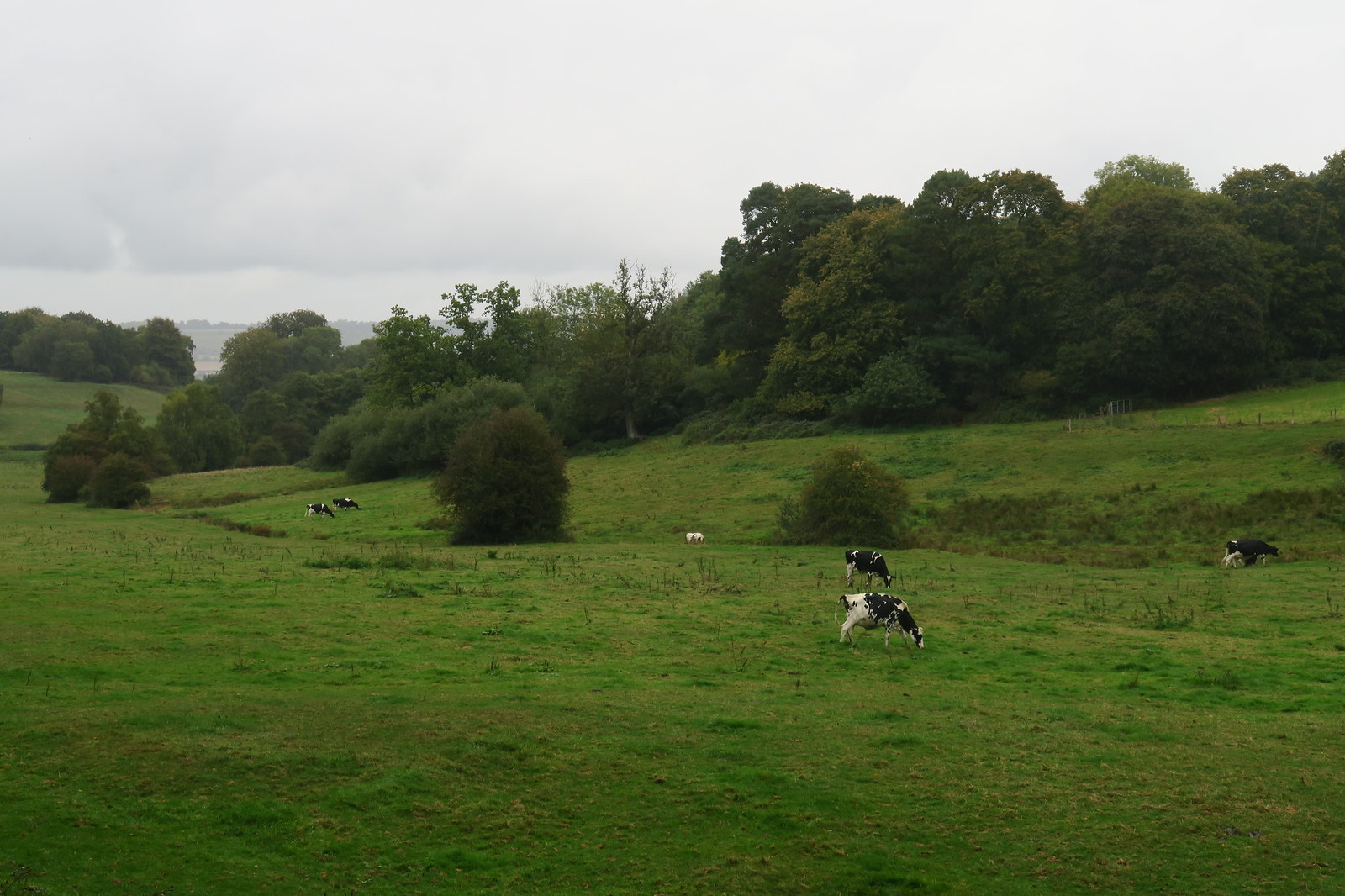 Oxted Circular 21.9.18 view 2