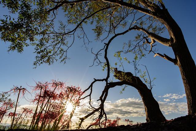 桂浜園地21・Katsurahama Park, Nikon D750, AF-S Nikkor 20mm f/1.8G ED