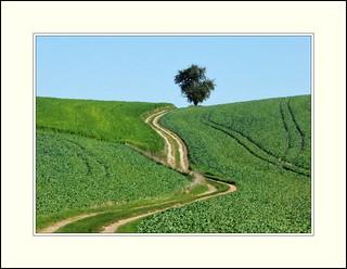 Rottal - Weg bei Aicha