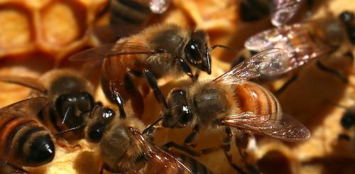 Bee My Friend