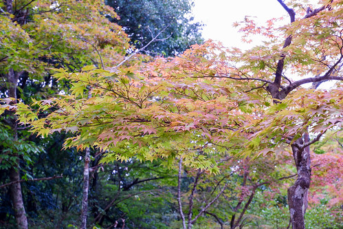 2018.10.07 瑞宝寺公園
