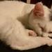 Sleepy Magic