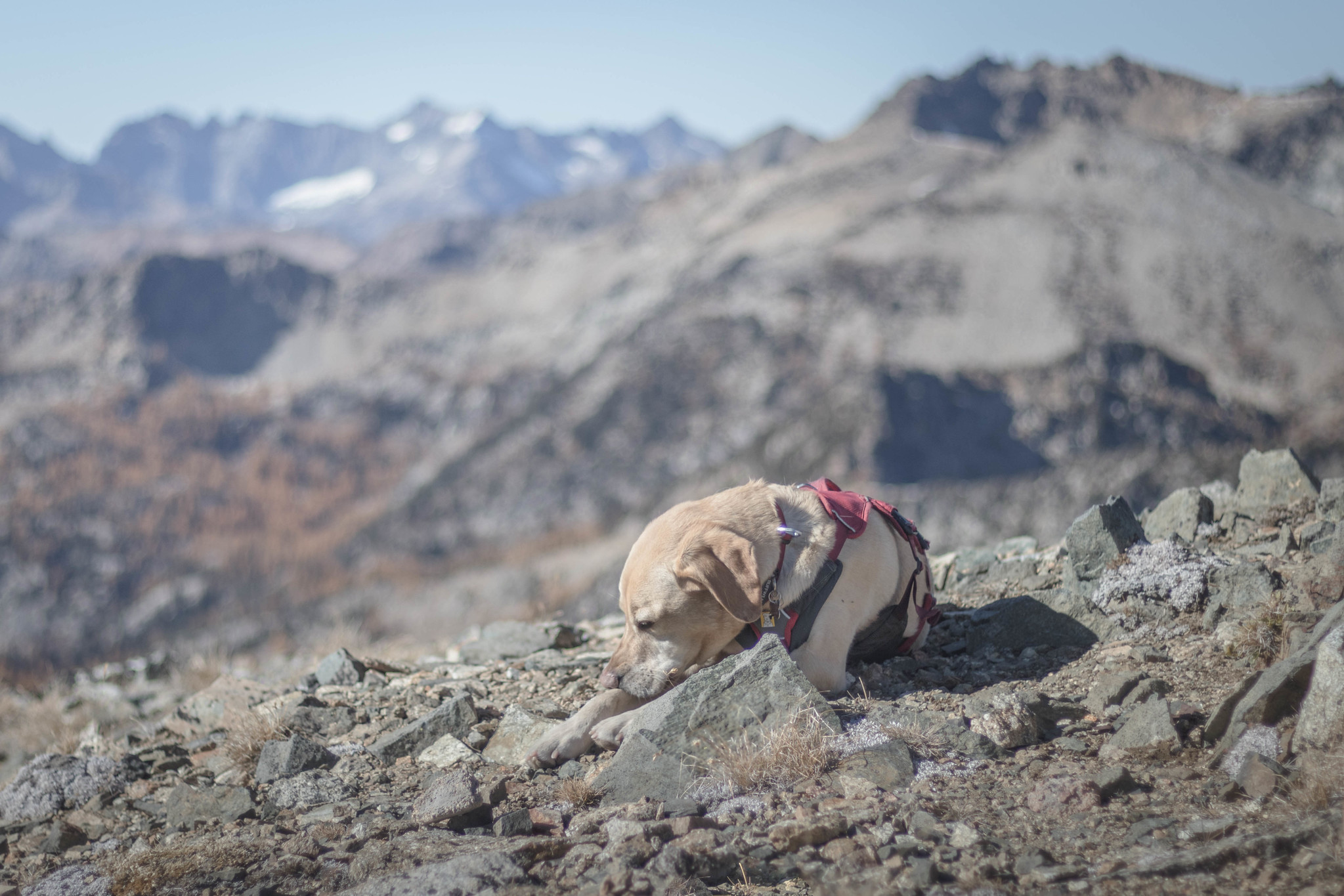 Summit dogs on Pyramid Mountain