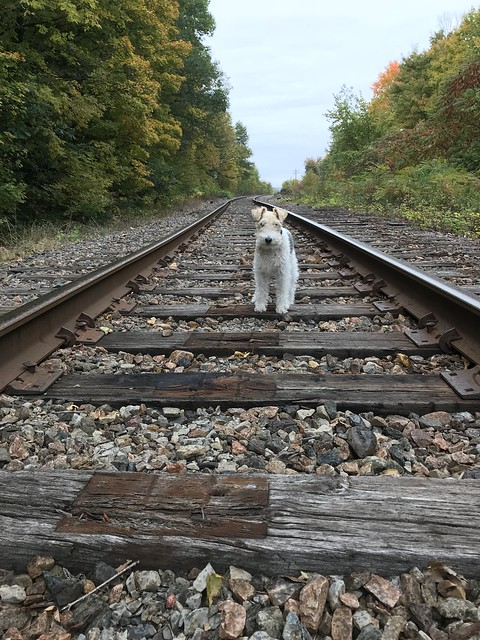 Piper rides the rails