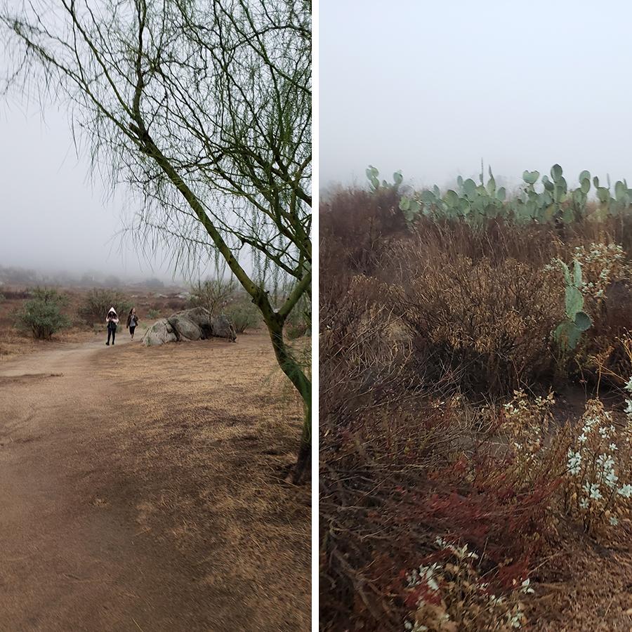 desert-misty-morning-2